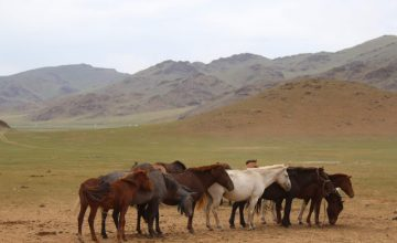 RUSEN[KÜLTÜR]: Orta Asya'da binlerce yıl öncesinde baytarlık